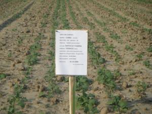 imagine din campul de cercetare Cerna, Tulcea - 2008